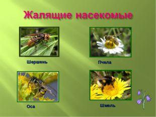 Шершень Пчела Оса Шмель