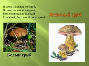 Белый гриб Я стою на ножке толстой, Я стою на ножке гладкой, Под коричневою ш