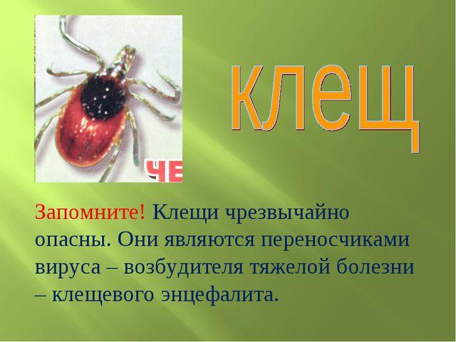 Запомните! Клещи чрезвычайно опасны. Они являются переносчиками вируса – возб...