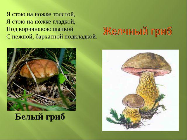Белый гриб Я стою на ножке толстой, Я стою на ножке гладкой, Под коричневою ш...