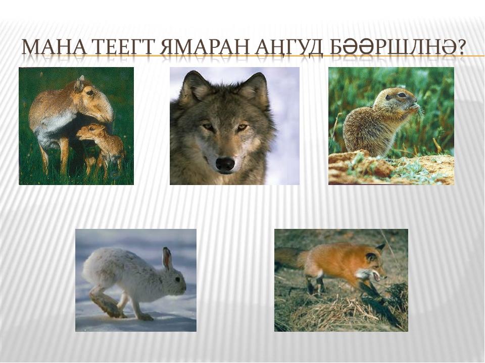 Гөрәсн Чон Зурмн Туула Арат