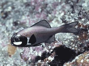 http://www.rybafish.umclidet.com/svet_ryb/svet2.jpg