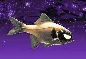 http://www.rybafish.umclidet.com/svet_ryb/svet1.jpg