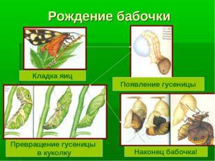 Рождение бабочки Кладка яиц Появление гусеницы Превращение гусеницы в куколку