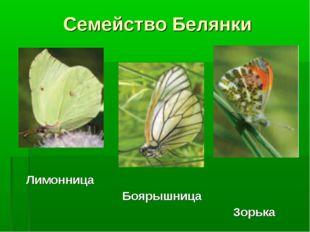 Семейство Белянки Лимонница Боярышница Зорька