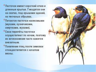 Ласточки имеют короткий клюв и длинные крылья. Гнездятся они на скалах, под к
