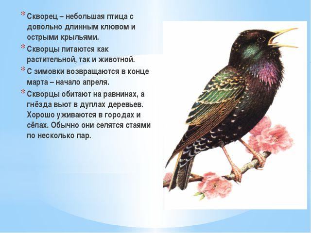 Скворец – небольшая птица с довольно длинным клювом и острыми крыльями. Сквор...