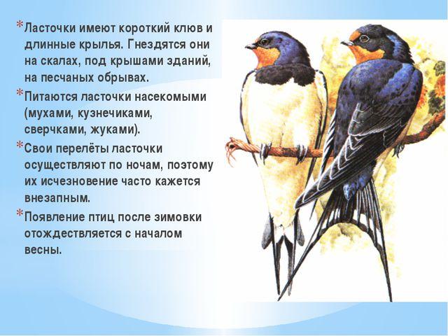 Ласточки имеют короткий клюв и длинные крылья. Гнездятся они на скалах, под к...