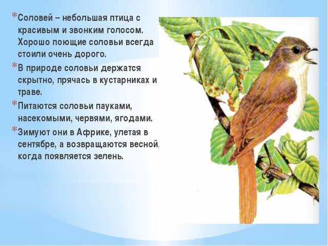 Соловей – небольшая птица с красивым и звонким голосом. Хорошо поющие соловьи...
