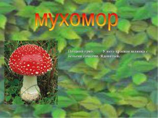 Поздний гриб. У него красная шляпка с белыми точками. Ядовитый.