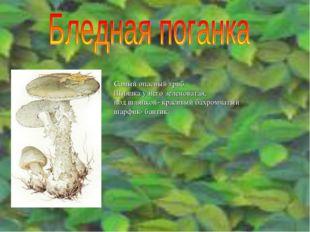 Самый опасный гриб. Шляпка у него зеленоватая, под шляпкой- красивый бахромча