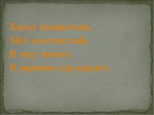 Хвост пушистый, Мех золотистый, В лесу живет, В деревне кур крадет.