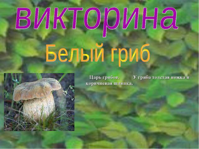 Царь грибов. У гриба толстая ножка и коричневая шляпка.