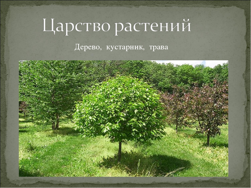 Дерево, кустарник, трава