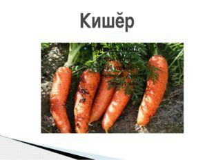 Кишĕр