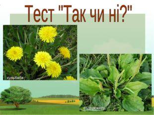 Чи культурні ці рослини: Помідор, гарбуз, малина, Морква, жито, огірки, Мак,