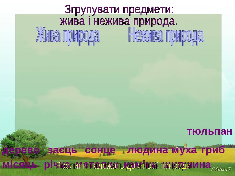 місяць річка сонце камінь дерево заєць гриб людина муха метелик тюльпан шипш...