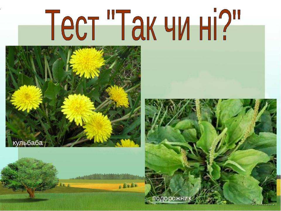 Чи культурні ці рослини: Помідор, гарбуз, малина, Морква, жито, огірки, Мак,...