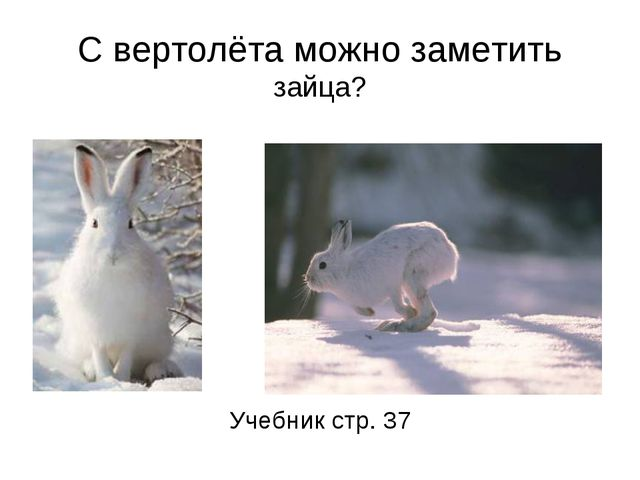 С вертолёта можно заметить зайца? Учебник стр. 37