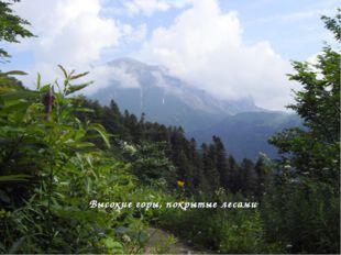 Высокие горы, покрытые лесами