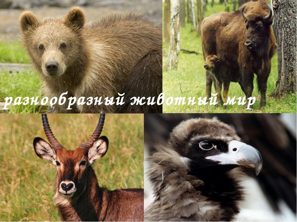разнообразный животный мир