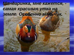 Мандаринка, мне кажется, - самая красивая утка на земле. Особенно мальчик.