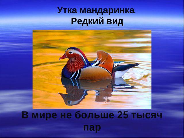 Утка мандаринка Редкий вид В мире не больше 25 тысяч пар