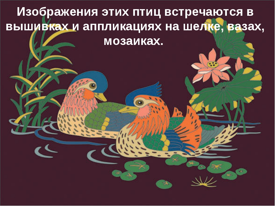 Изображения этих птиц встречаются в вышивках и аппликациях на шелке, вазах, м...