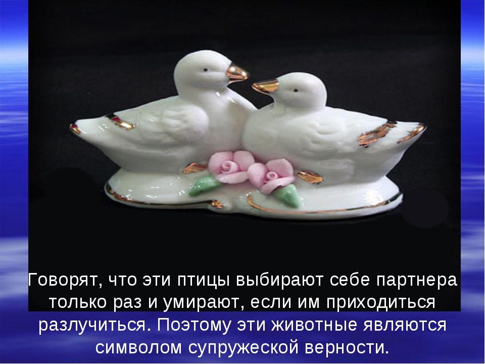 Говорят, что эти птицы выбирают себе партнера только раз и умирают, если им...