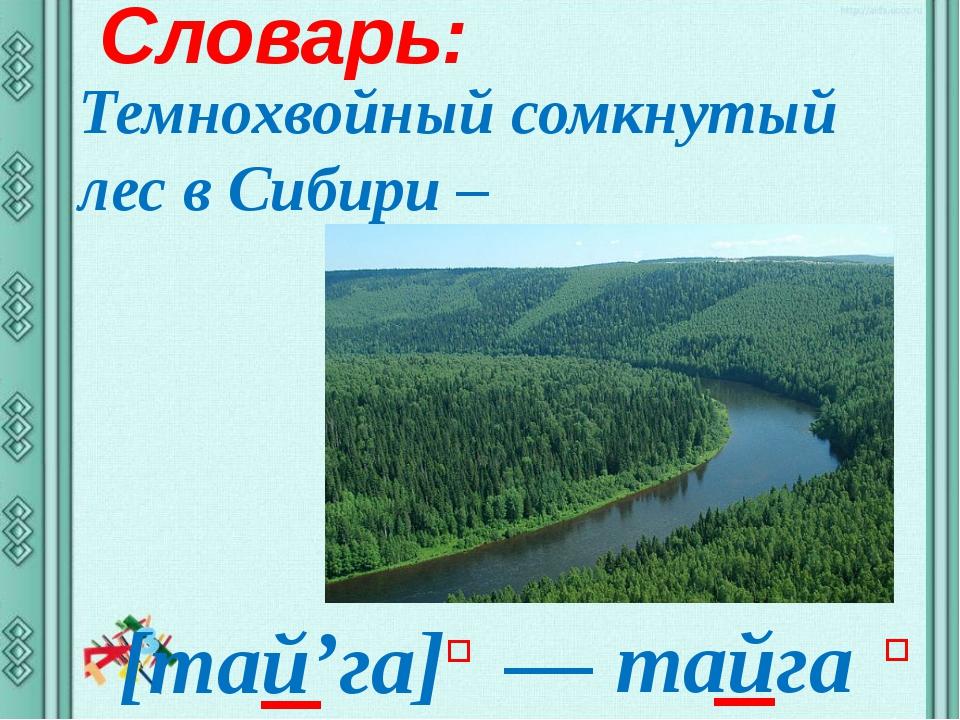 Словарь: Темнохвойный сомкнутый лес в Сибири – ― тайга [тай'га] ʹ ʹ