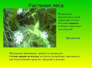 Растения леса Встречается практически по всей территории России. Растение ядо