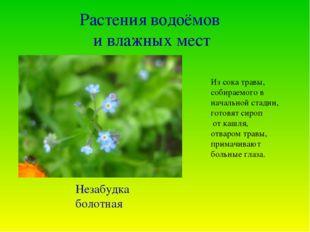 Растения водоёмов и влажных мест Из сока травы, собираемого в начальной стади