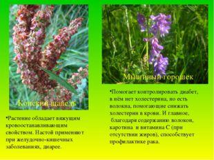 Конский щавель Мышиный горошек Растение обладает вяжущим кровоостанавливающим