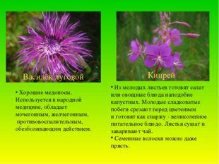Кипрей Василёк луговой Из молодых листьев готовят салат или овощные блюда нап