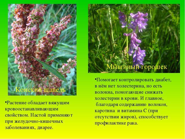 Конский щавель Мышиный горошек Растение обладает вяжущим кровоостанавливающим...