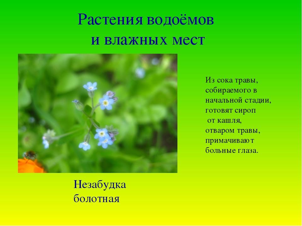 Растения водоёмов и влажных мест Из сока травы, собираемого в начальной стади...