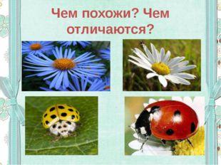 Чем похожи? Чем отличаются?