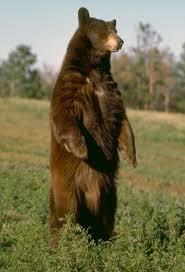C:\Users\Денис\Desktop\медведь.jpg