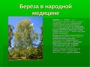 Берёза в народной медицине Берёза (лат.Bétula)— род листопадных деревьев и
