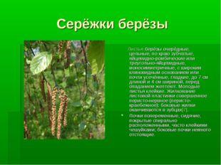 Серёжки берёзы Листья берёзы очерёдные, цельные, по краю зубчатые, яйцевидно-