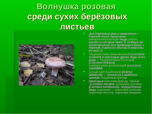 Волнушка розовая среди сухих берёзовых листьев Для берёзовых рощ и смешанных...