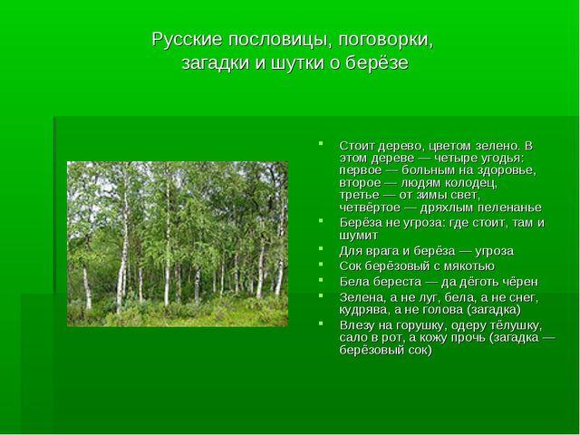 Русские пословицы, поговорки, загадки и шутки о берёзе Стоит дерево, цветом з...