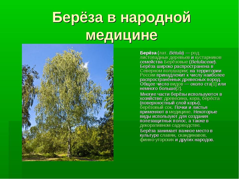 Берёза в народной медицине Берёза (лат.Bétula)— род листопадных деревьев и...