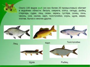 Около 100 видов рыб (из них более 20 промысловых) обитает в водоёмах области: