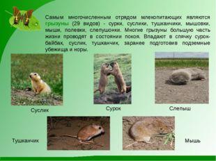 Самым многочисленным отрядом млекопитающих являются грызуны (29 видов) - сурк