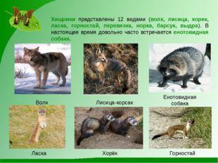 Лисица-корсак Волк Енотовидная собака Хищники представлены 12 видами (волк, л