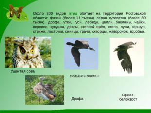 Большой баклан Ушастая сова Орлан-белохвост Дрофа Около 200 видов птиц обитае