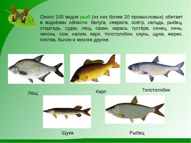 Около 100 видов рыб (из них более 20 промысловых) обитает в водоёмах области:...