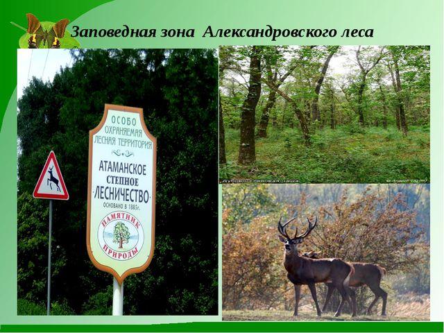 Заповедная зона Александровского леса