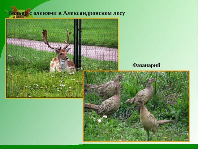 Вольер с оленями в Александровском лесу Фазанарий